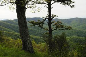 Shenandoah Mountain View in Springtime by Darlyne A. Murawski