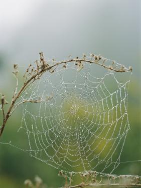 Spiderweb Covered in Dew by Darlyne A. Murawski