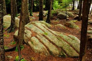Trees and Rocks in a Forest Understory in Acadia National Park by Darlyne A. Murawski