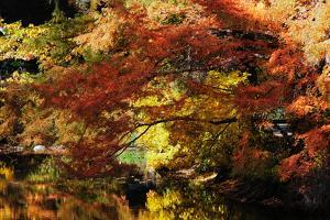 Trees with Autumn Foliage at the Edge of a Pond by Darlyne A. Murawski