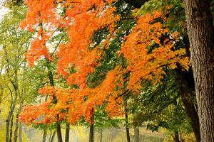 Trees with Autumn Foliage by the Concord River by Darlyne A. Murawski