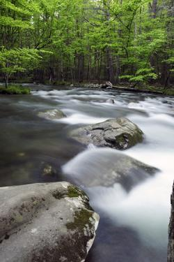 View of Forest and the Rushing Waters of the Little River in Spring by Darlyne A. Murawski