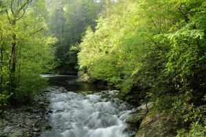 View of Laurel Creek Early on a Spring Morning by Darlyne A. Murawski