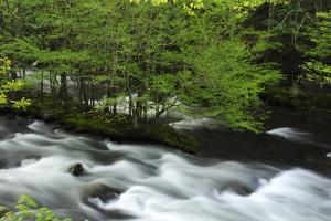 Water Rushing Through the Little River in Spring by Darlyne A. Murawski