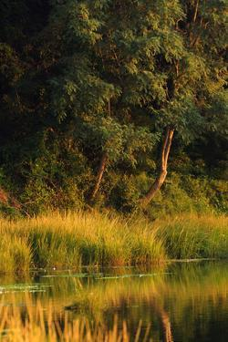 Where Forest Meets a Coastal Salt Pond by Darlyne A. Murawski