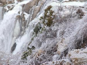 Winter Scene with Ice-Covered Plants in Front of Shoshone Falls by Darlyne A. Murawski