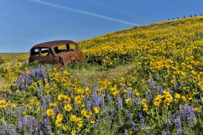 Abandoned car in springtime wildflowers, Dalles Mountain Ranch State Park, Washington State by Darrell Gulin