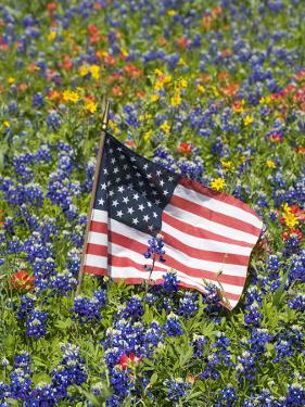 American Flag in Field of Blue Bonnets, Paintbrush, Texas Hill Country, USA by Darrell Gulin