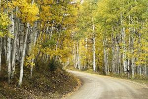 Aspens Lining Kebler Pass Road by Darrell Gulin