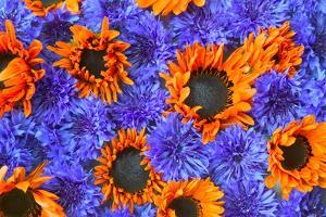 Blue Bachelor's Buttons and Orange Sunflowers by Darrell Gulin