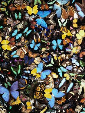 Butterflies by Darrell Gulin