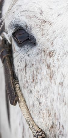 Close-up of horse by Darrell Gulin