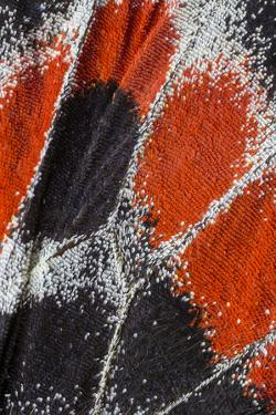 Close-up patterns of butterfly wings showing the tiny overlapping scales. by Darrell Gulin