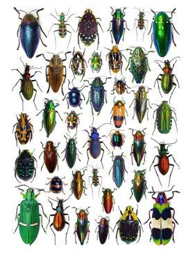 Colorful Design and Pattern of Beetles by Darrell Gulin