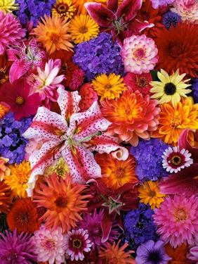 Colorful Flowers by Darrell Gulin