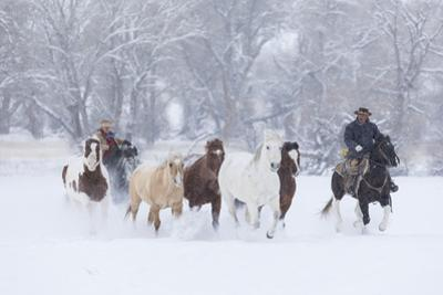 Cowgirl and boy Herding Horses in winters snow, Hideout Ranch, Shell, Wyoming., by Darrell Gulin