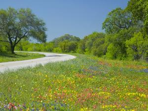 Curve in Roadway with Wildflowers Near Gonzales, Texas, USA by Darrell Gulin