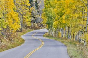 Curved Roadway near Aspen, Colorado in autumn colors and aspens groves. by Darrell Gulin