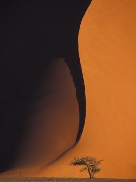 Dusk Falls on Soussevlei Sand Dunes, Namibia by Darrell Gulin