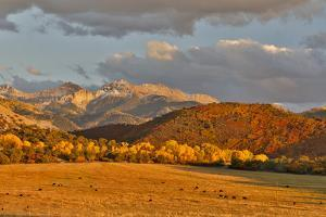 Evening last light San Juan Mountains autumn colors off of Owl Road near Ridgway, Colorado. by Darrell Gulin