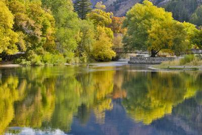 Fall colored trees along Logan River, Utah, in the Wasatch Mountains by Darrell Gulin