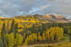 Fall colors near Kebler Pass, Crested Butte by Darrell Gulin