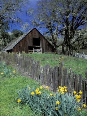 Fence, Barn and Daffodils, Northern California, USA by Darrell Gulin