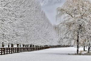 Fence line and fresh snow with trees covered in snow. by Darrell Gulin