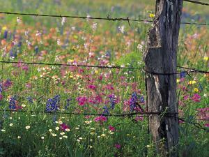 Fence Post and Wildflowers, Lytle, Texas, USA by Darrell Gulin
