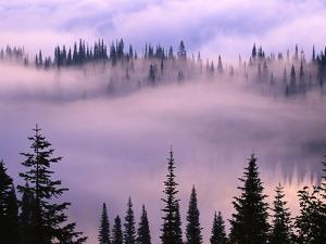 Fog Lifting over Trees by Darrell Gulin
