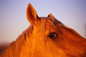 Horse's Eye by Darrell Gulin