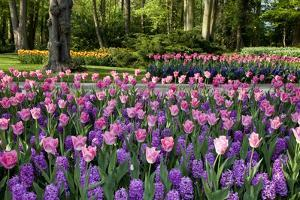 Keukenhof Gardens Near Lisse in Springtime Bloom by Darrell Gulin