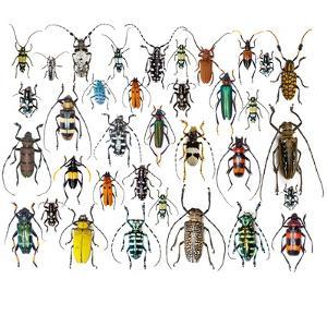 Long Horned Beetles in Design Layout and Size Relationship by Darrell Gulin