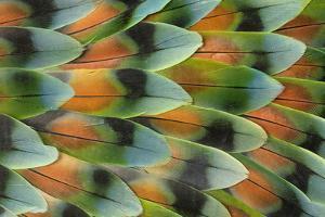 Lovebird tail feather pattern, Bandon, Oregon by Darrell Gulin