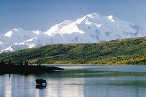 Mount Mckinley and Feeding Moose by Darrell Gulin