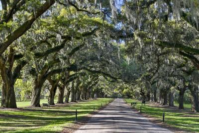 Oak lined road, Charleston, South Carolina by Darrell Gulin