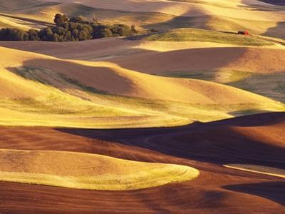 Rolling Wheat and Fallow Fields by Darrell Gulin
