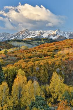 San Juan Mountains from the Dallas Divide morning light on fall colored Oak and Aspen, Colorado. by Darrell Gulin