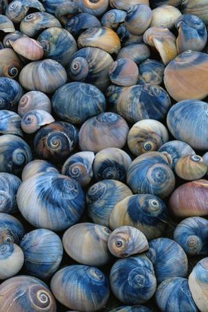 Shells by Darrell Gulin