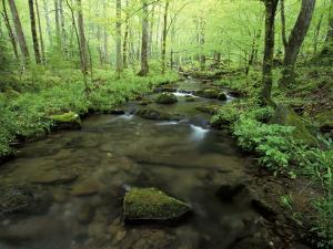 Small Stream in Dense Forest of Great Smoky Mountains National Park, Tennessee, USA by Darrell Gulin