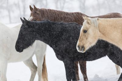 Snow and horses, Hideout Ranch, Shell, Wyoming. by Darrell Gulin