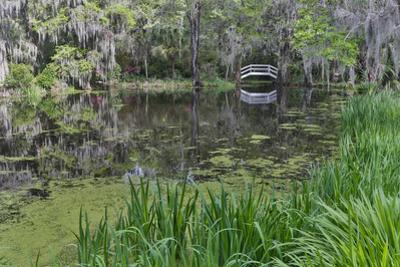 Springtime azalea blooming, Charleston, South Carolina, with white arched bridge. by Darrell Gulin