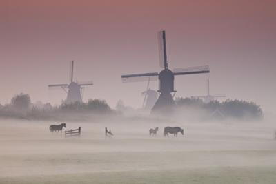 Sunrise and Morning Fog with Silhouetted Windmills and Horses in Field Kinderdijk, Netherlands