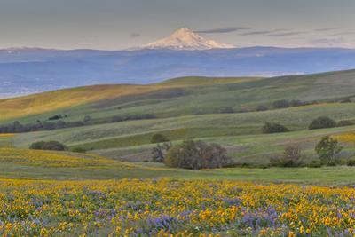 Sunrise and Mt. Hood, Dalles Mountain Ranch State Park, Washington State by Darrell Gulin