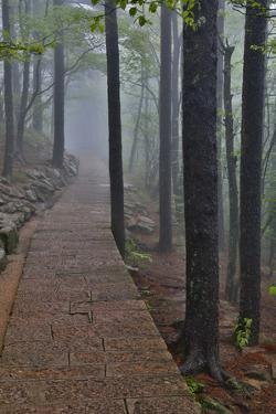 Trail in Fog, Yellow Mountains a UNESCO World Heritage Site by Darrell Gulin