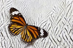 Viceroy Butterfly on Silver Pheasant Feather Pattern by Darrell Gulin