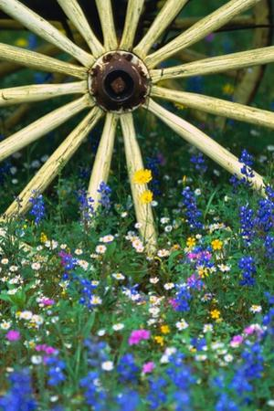 Wagon Wheel Sitting Among Wildflowers by Darrell Gulin
