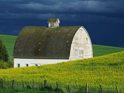 White Barn and Canola Field