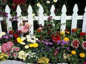 White Picket Fence and Flowers, Sammamish, Washington, USA by Darrell Gulin