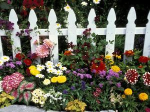 White Picket Fence and Flowers, Sammamish, Washington, USA by Darrell Gulin